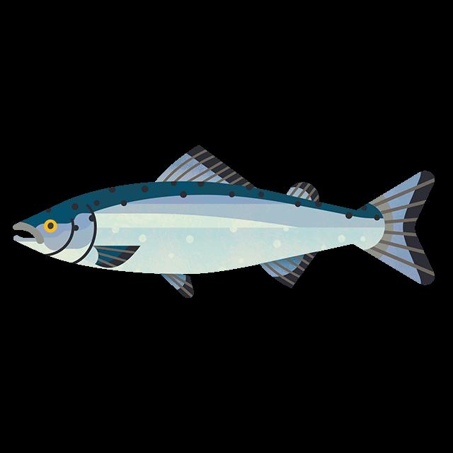 atlantic-salmon Tiny Png